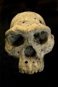 Name:  skull1.jpg Views: 55 Size:  7.7 KB