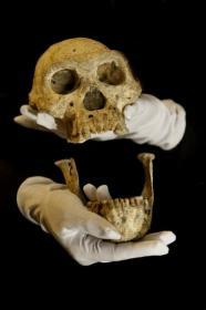 Name:  skull 2.jpg Views: 54 Size:  6.9 KB
