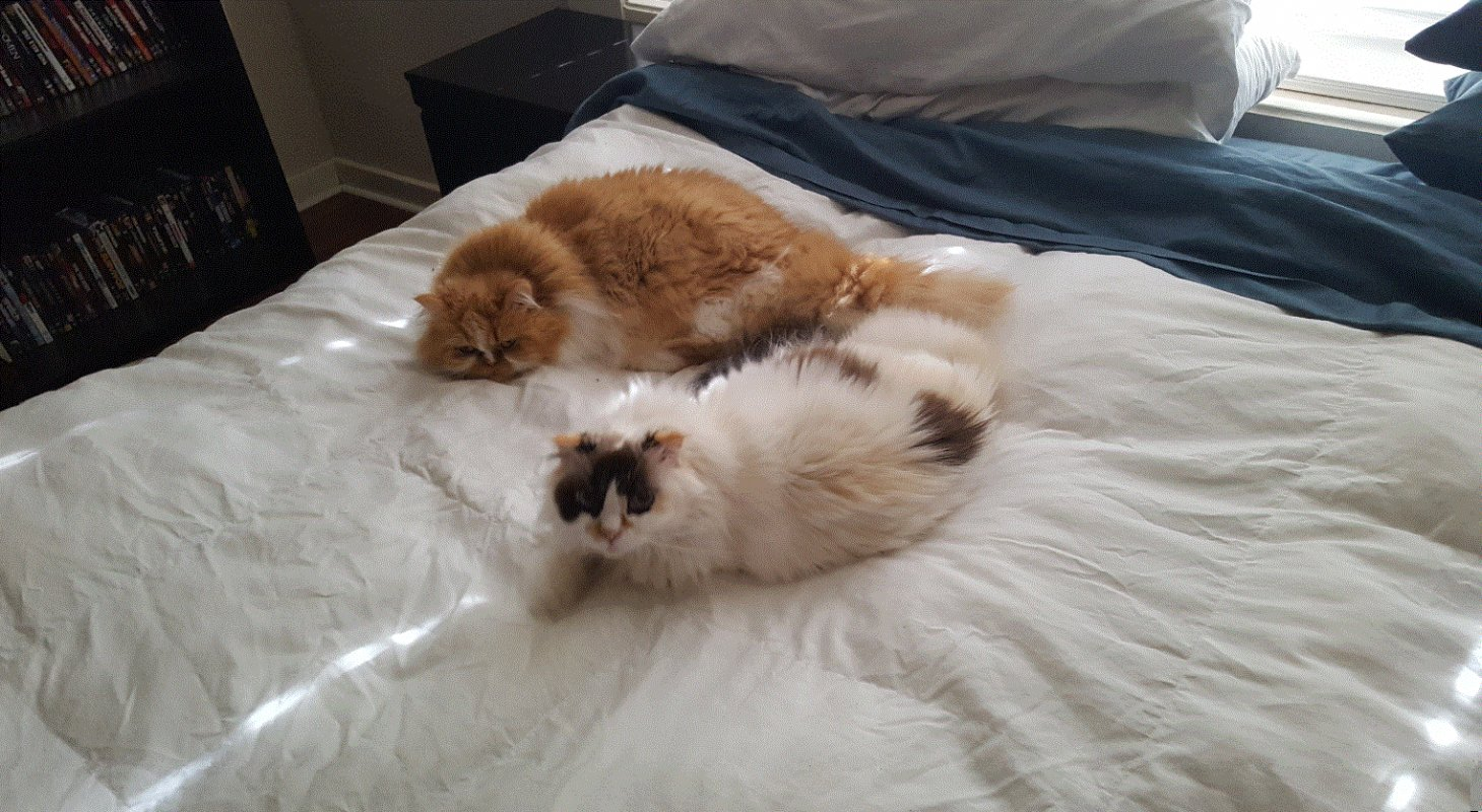 Name:  Two Cats.jpg Views: 42 Size:  262.8 KB