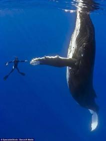 Name:  perfectly_timed_photos_4.jpg Views: 70 Size:  6.0 KB